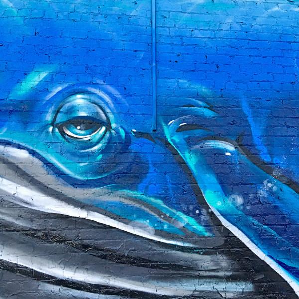 2_Aquarium_IsaacCaruso
